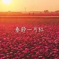 影片截圖-嘉義花海01.jpg