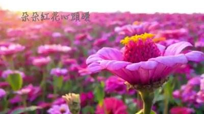 影片截圖-嘉義花海02.jpg