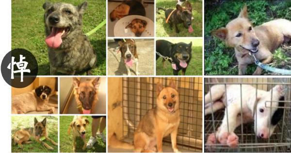 從基層捕狗清潔隊員,一路往上,層層主管單位大老,都眼盲、耳聾、嘴啞、心臟痲痺了?
