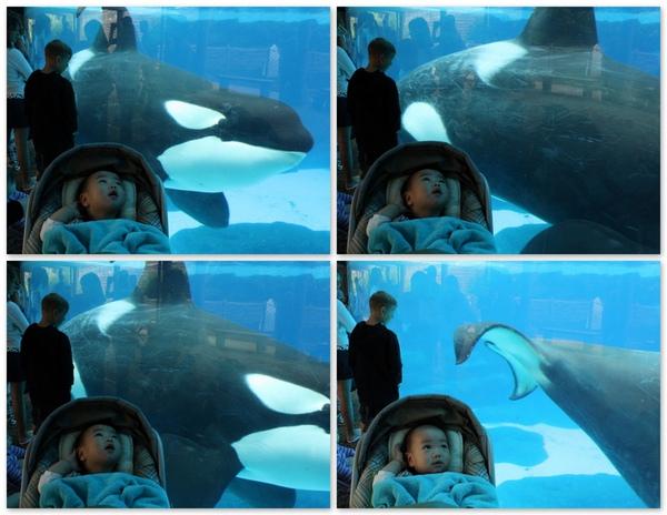 0416 Sea World.jpg