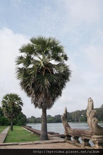 9-3單-棕梠樹1