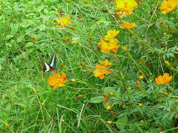 美美的蝴蝶