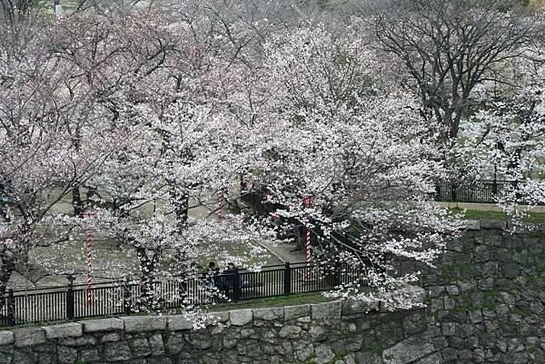 Sakura-09