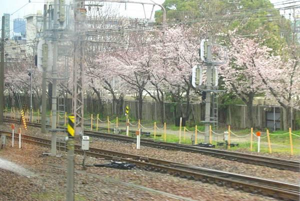 大阪到京都沿路