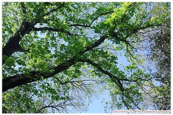 Tree*Sunshine