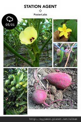 阿爸健康農園農產