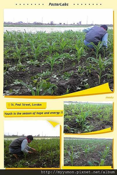 農作20160116001.jpg