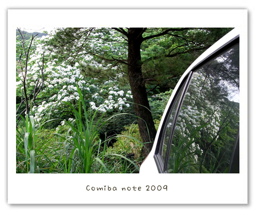 2009050211.jpg
