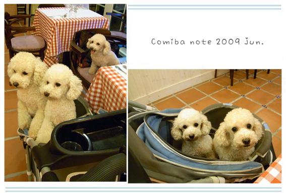 2009061303.jpg