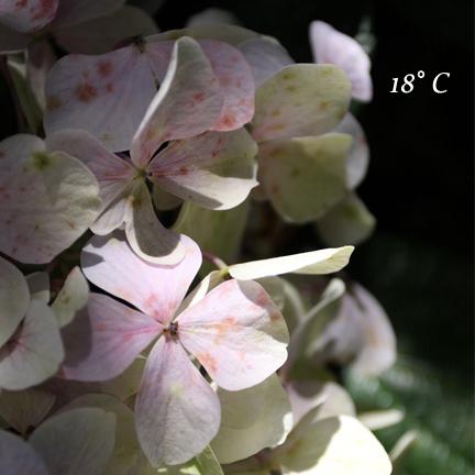 2010071101.jpg