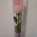 我最愛的玫瑰花