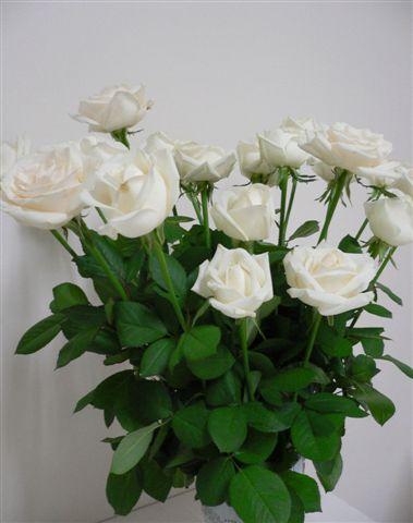我最愛的玫瑰