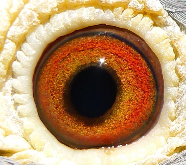 2010-993-eye1.jpg