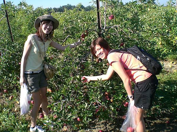 要拍照了,採蘋果的Pose要擺好!