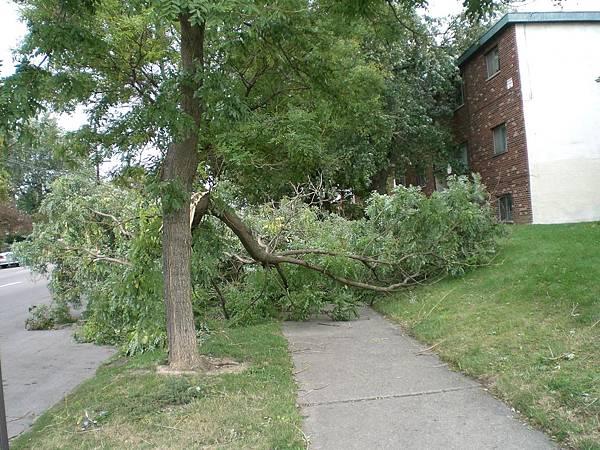 家門口的樹