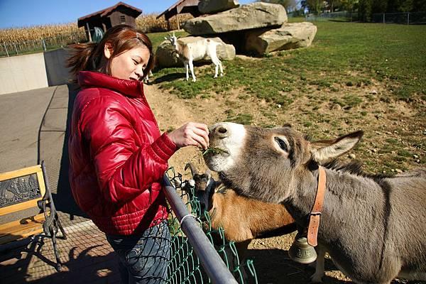 餐廳外養驢子跟羊,第一次進距離接近驢子,他們好可愛喔~