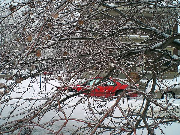 二月的大雪,像糖葫蘆的樹枝