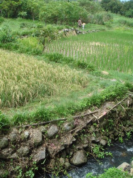 農莊美景01