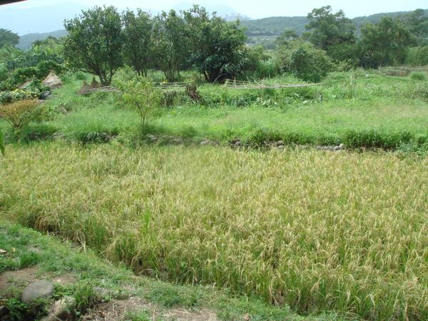 農莊美景02