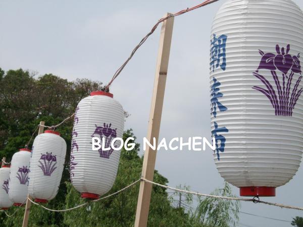 潮来の菖蒲祭り