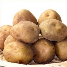 男爵薯.jpg