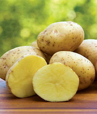 Yukon Gold potatoes.jpg