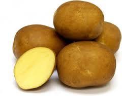 Sierra Gold potato.jpg