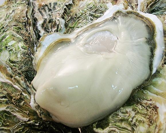 三陸もまれ牡蠣.jpg