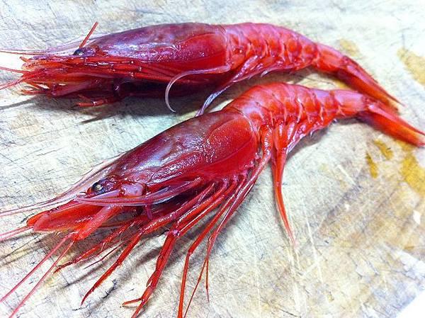 葉狀擬鬚蝦.jpg