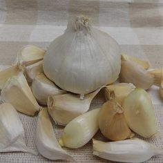 Northern White garlic.jpg
