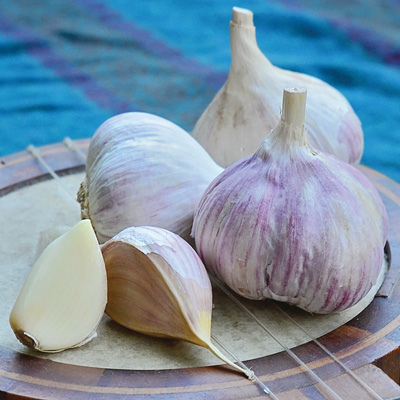 Music garlic.jpg