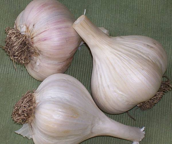 Georgian-Crystal-Garlic-Bulbs.jpg