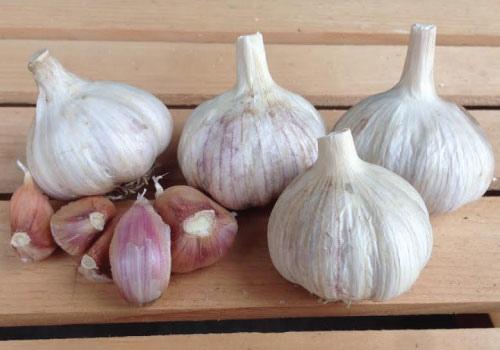 Italian Red garlic.jpg