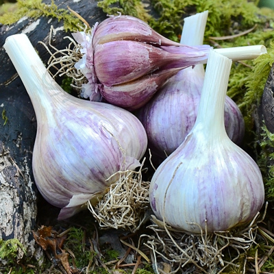 Vietnamese Red garlic.jpg