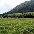 金針、竹林與森林