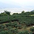 贊平的茶園