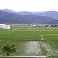源城的稻田