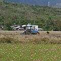 大波斯菊與曳引機