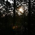 清晨的森林