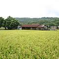 田裡面的舊農舍
