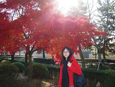 maple tree & mary