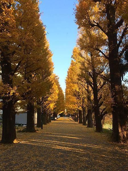 komatetsu_21.jpg