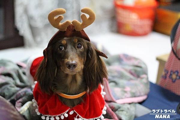 寵物聖誕裝 (1).JPG