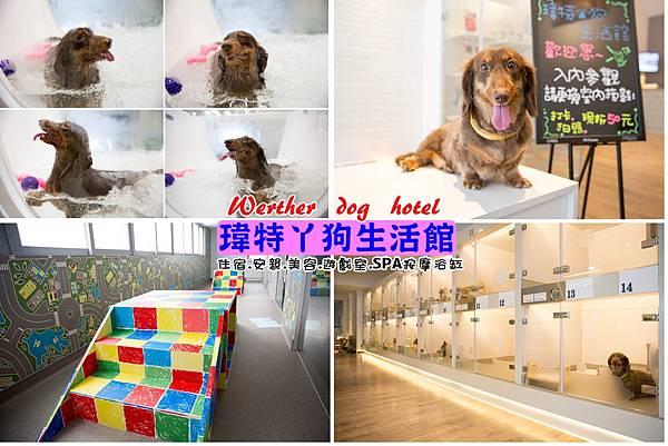台中狗狗住宿-瑋特丫狗生活館