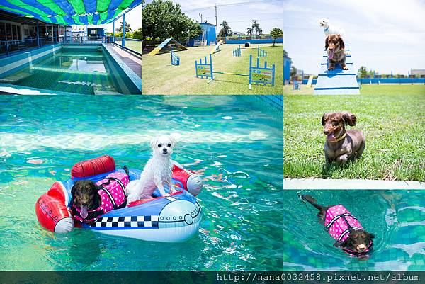 彰化寵物游泳池 鹿和訓犬學校 (1).jpg