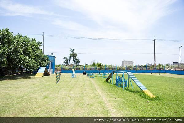彰化寵物游泳池 鹿和訓犬學校 (5).jpg