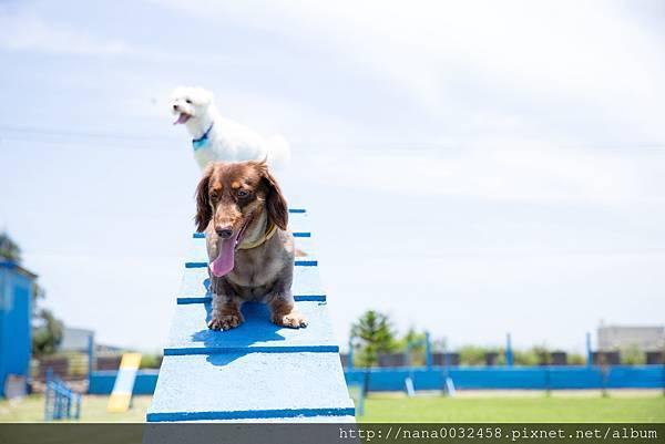 彰化寵物游泳池 鹿和訓犬學校 (7).jpg