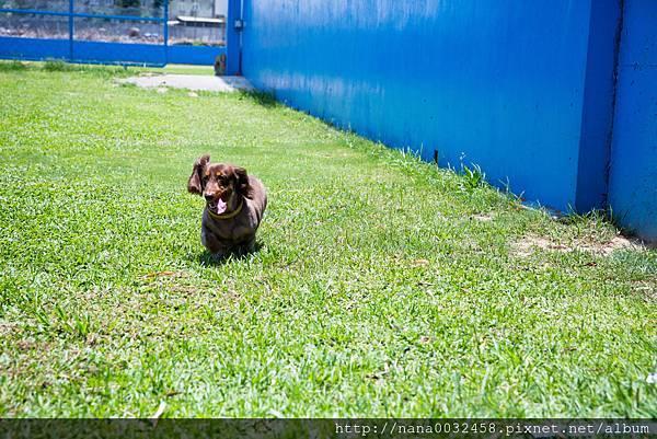 彰化寵物游泳池 鹿和訓犬學校 (9).jpg