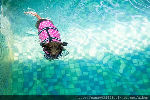 彰化寵物游泳池 鹿和訓犬學校 (16).jpg