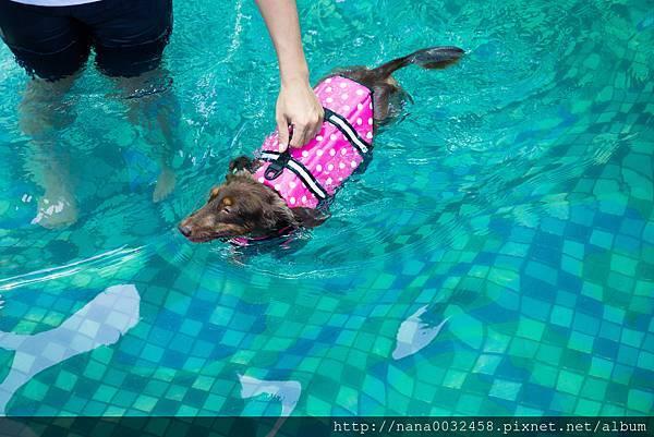 彰化寵物游泳池 鹿和訓犬學校 (18).jpg